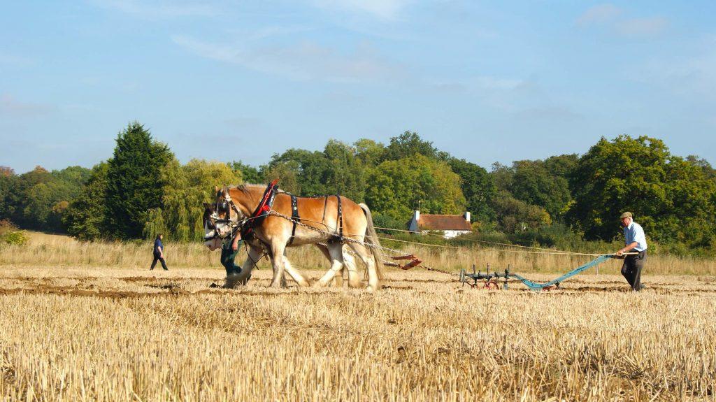 hombre trabajando con mamíferos