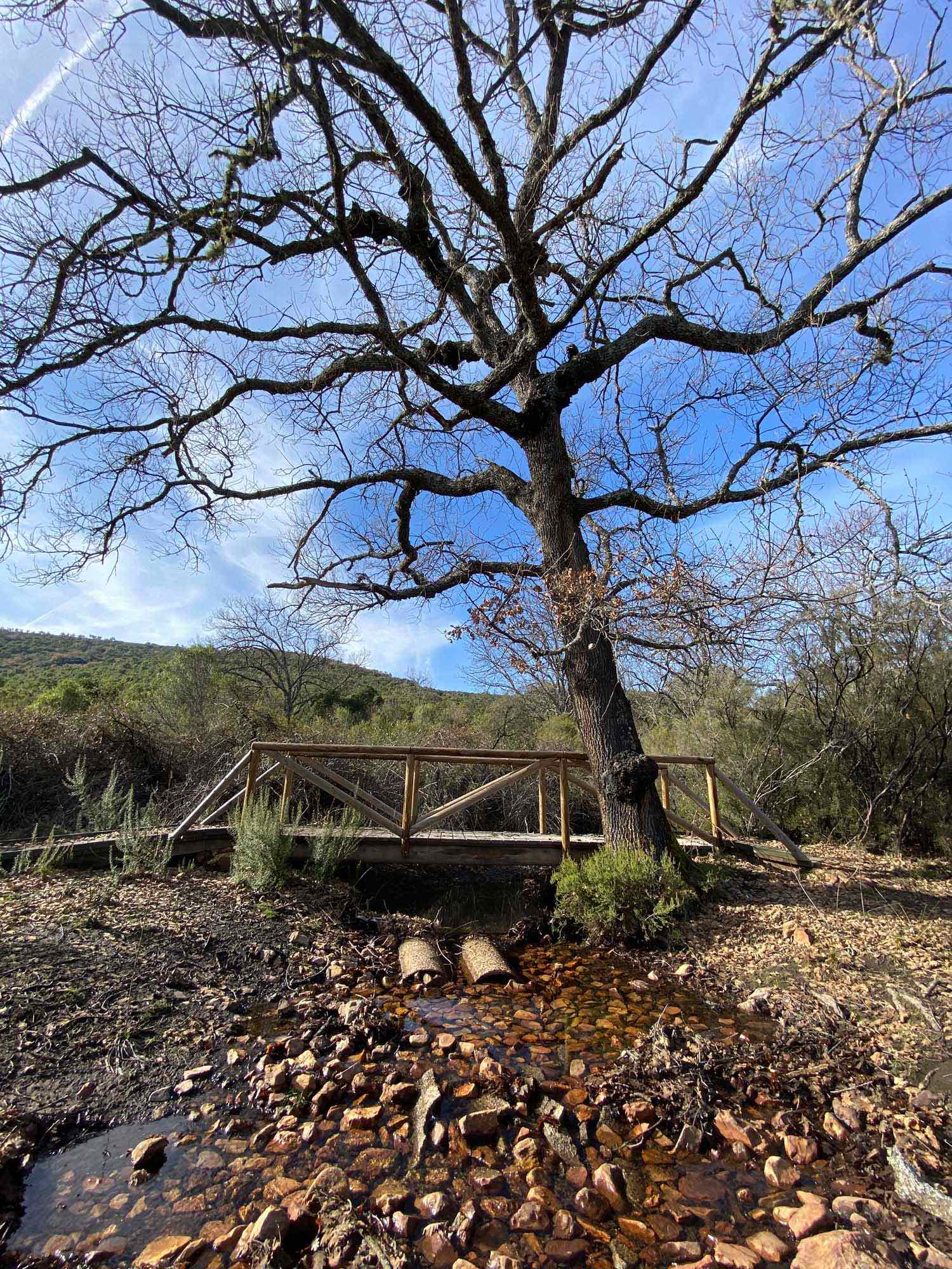Famoso Rebollo junta al puente en la ruta de la Viñuela