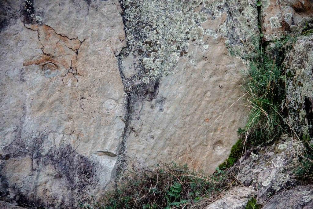 anémonas Boqueron Estena paleontología