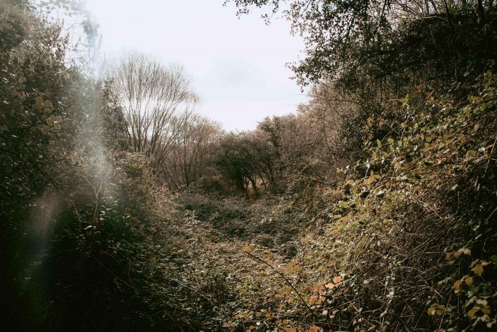 La chorrera y el bosque de ribera