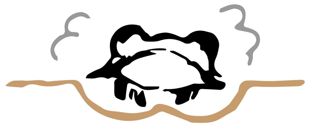 Ilustración frontal de la formación de la cruziana por el trilobites
