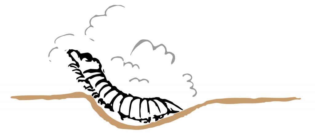 Ilustración lateral de la formación de la cruziana por el trilobites