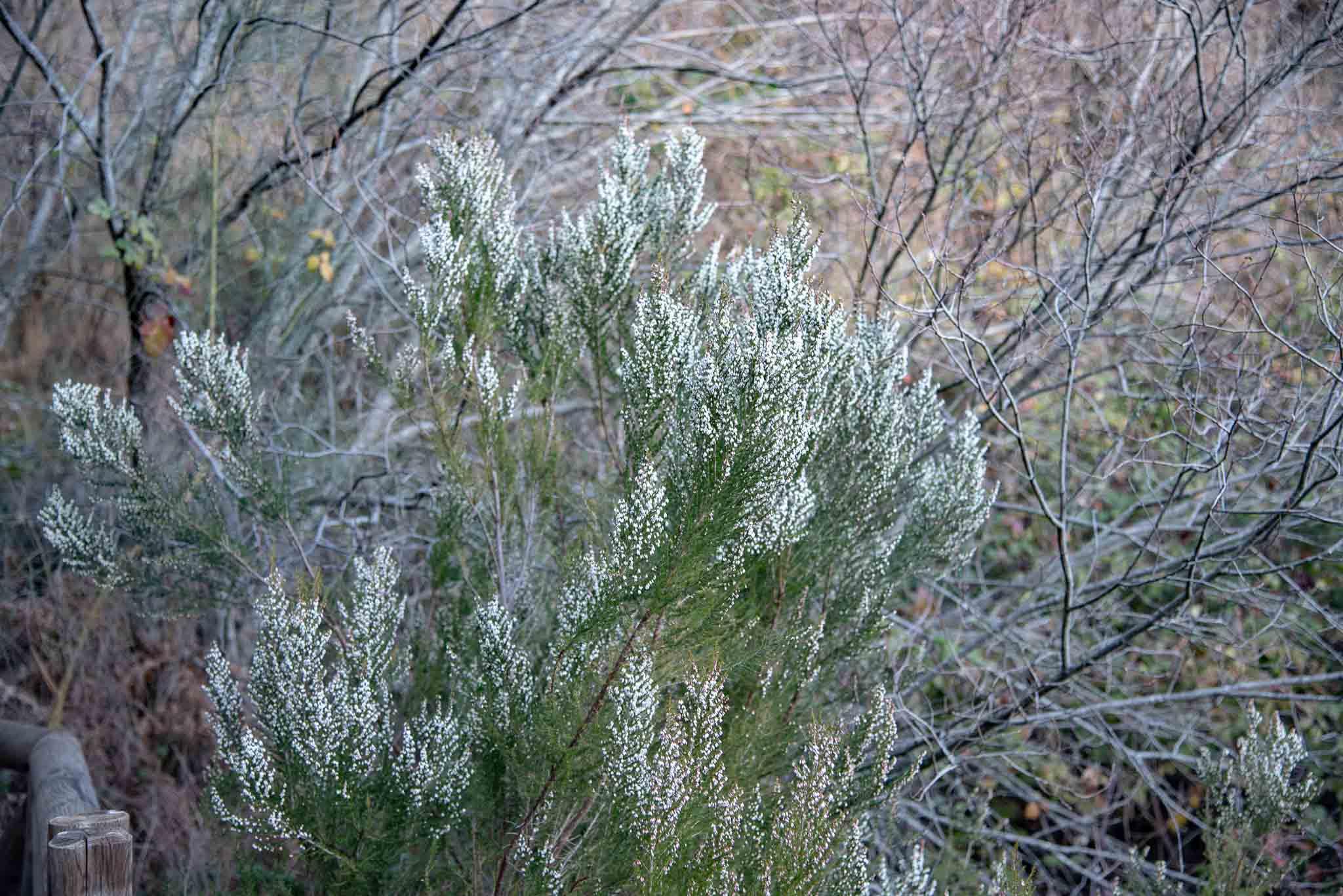 chorrera erica brezales