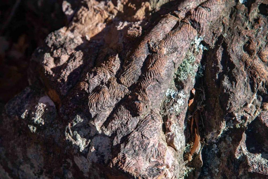 Cruziana trilobites en el Chorro de los Navalucillos
